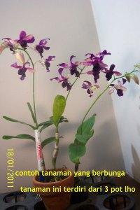 Contoh tanaman yang kami jual